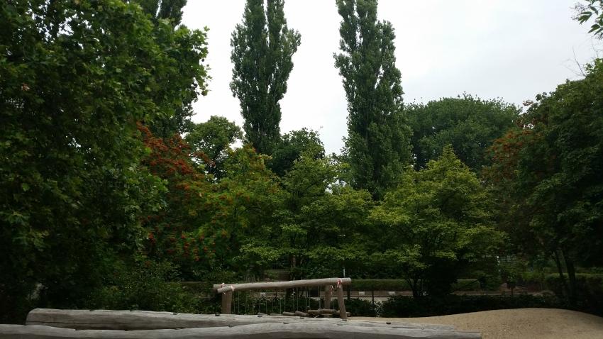3-Ein-Teil-des-Baum-und-Strauchbestandes-des-Schulgrundstücks-vom-Schulhof-aus-gesehen-Richtung-Parkplatz-begrenzt-von-einer-Mauer-mit-Metallzaun