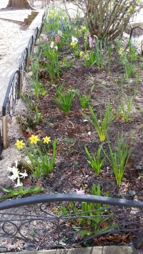 Schulhofbeet im Frühjahr
