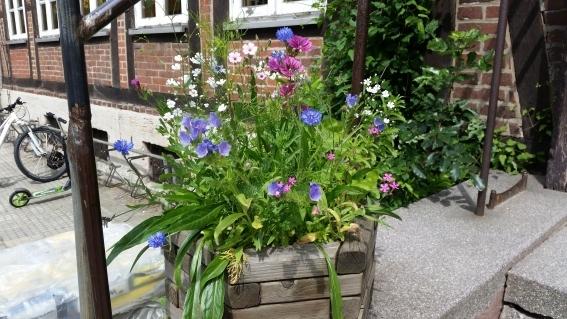 Pflanzgefäß mit Wildblumen